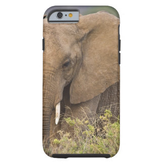 Africa. Kenya. Elephant at Samburu NP. Tough iPhone 6 Case