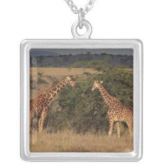 Africa, Kenya, Lewa Downs, Two reticulated Silver Plated Necklace