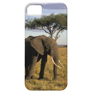 Africa, Kenya, Maasai Mara. An elehpant in the iPhone 5 Covers