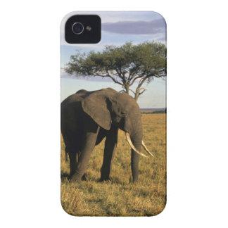 Africa, Kenya, Maasai Mara. An elehpant in the iPhone 4 Case-Mate Case