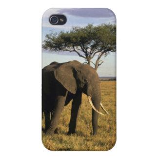 Africa, Kenya, Maasai Mara. An elehpant in the Case For iPhone 4