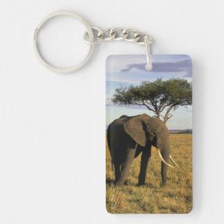 Africa, Kenya, Maasai Mara. An elehpant in the Keychain