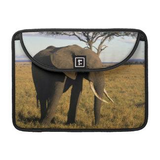 Africa, Kenya, Maasai Mara. An elehpant in the MacBook Pro Sleeves