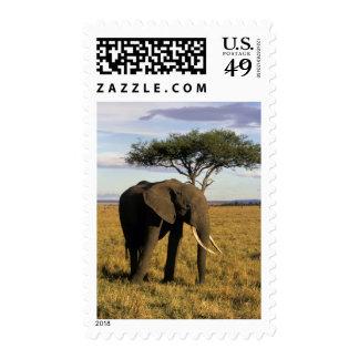 Africa, Kenya, Maasai Mara. An elehpant in the Postage Stamps