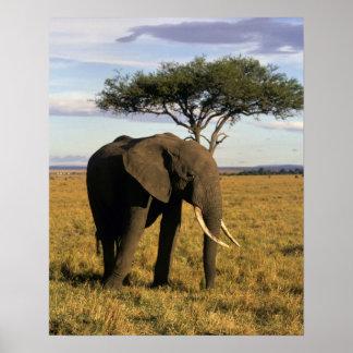 Africa, Kenya, Maasai Mara. An elehpant in the Poster