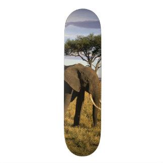 Africa, Kenya, Maasai Mara. An elehpant in the Skateboard