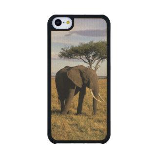 Africa, Kenya, Maasai Mara. An elehpant in the Carved® Maple iPhone 5C Slim Case