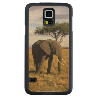 Africa, Kenya, Maasai Mara. An elehpant in the Carved® Maple Galaxy S5 Slim Case