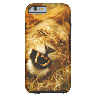 Africa, Kenya, Maasai Mara. Male lion. Wild Tough iPhone 6 Case