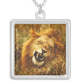 Africa Kenya Maasai Mara Male lion Wild Custom Necklace