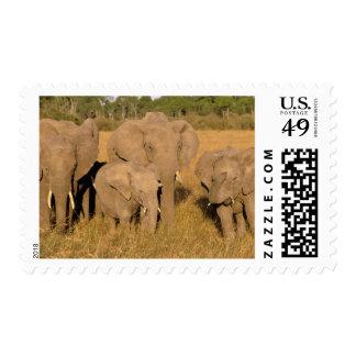 Africa, Kenya, Masai Mara. African Elephant Postage Stamps