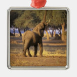 Africa, Kenya, Masai Mara. Elephant (Loxodonta Square Metal Christmas Ornament