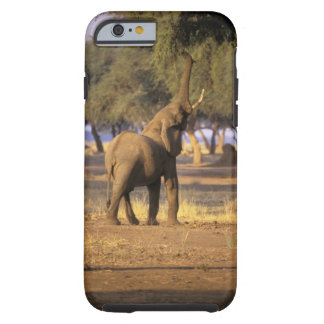 Africa, Kenya, Masai Mara. Elephant (Loxodonta Tough iPhone 6 Case