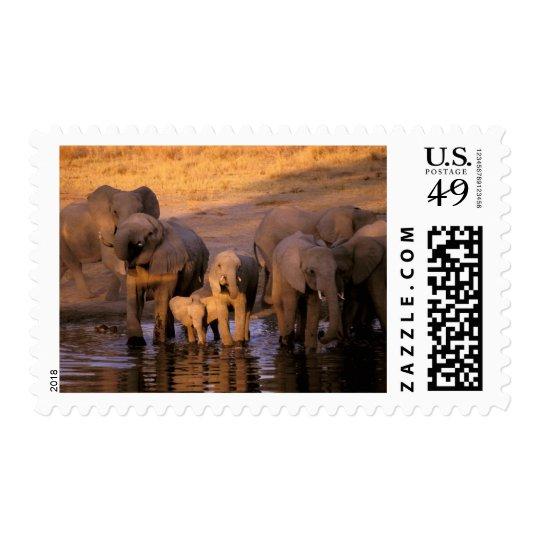 Africa, Kenya, Masai Mara. Elephants (Loxodonta Postage