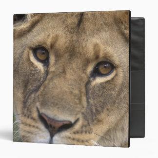 Africa, Kenya, Masai Mara Game Reserve, 2 3 Ring Binder