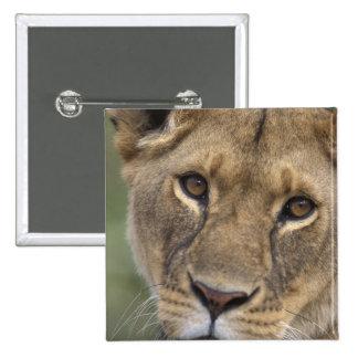Africa, Kenya, Masai Mara Game Reserve, 2 2 Inch Square Button