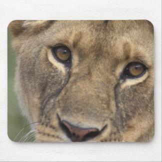 Africa, Kenya, Masai Mara Game Reserve, 2 Mouse Pad