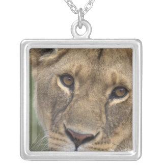 Africa, Kenya, Masai Mara Game Reserve, 2 Necklace