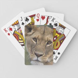 Africa, Kenya, Masai Mara Game Reserve, 2 Playing Cards