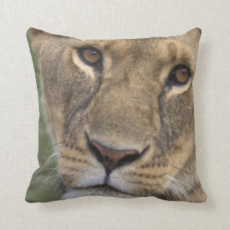 Africa, Kenya, Masai Mara Game Reserve, 2 Throw Pillow