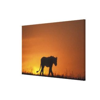 Africa, Kenya, Masai Mara Game Reserve, 3 Canvas Print