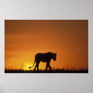 Africa, Kenya, Masai Mara Game Reserve, 3 Poster