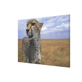 Africa, Kenya, Masai Mara Game Reserve, Adult 2 Canvas Print