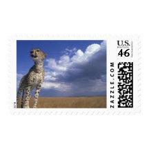 Africa, Kenya, Masai Mara Game Reserve, Adult 2 Postage Stamp