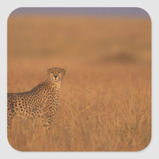Africa, Kenya, Masai Mara Game Reserve, Adult 2 Sticker