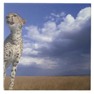 Africa, Kenya, Masai Mara Game Reserve, Adult 2 Tiles