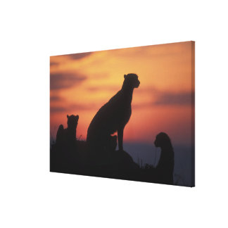 Africa, Kenya, Masai Mara Game Reserve, Adult 3 Gallery Wrapped Canvas