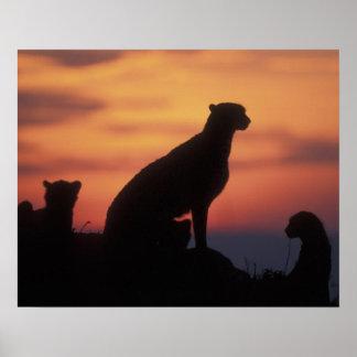 Africa, Kenya, Masai Mara Game Reserve, Adult 3 Poster
