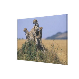 Africa Kenya Masai Mara Game Reserve Adult 4 Gallery Wrap Canvas