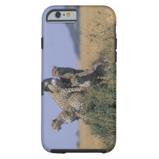 Africa, Kenya, Masai Mara Game Reserve, Adult 4 Tough iPhone 6 Case