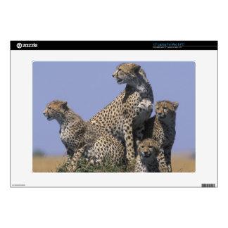 Africa, Kenya, Masai Mara Game Reserve, Adult 4 Decals For Laptops