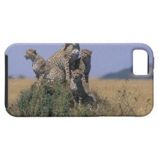 Africa, Kenya, Masai Mara Game Reserve, Adult 4 iPhone 5 Case