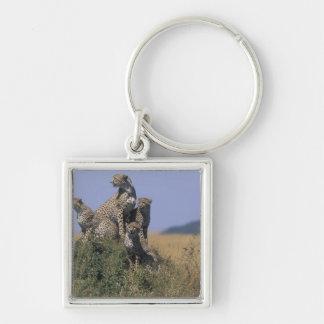 Africa, Kenya, Masai Mara Game Reserve, Adult 4 Keychain