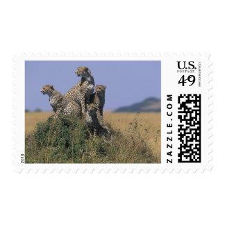 Africa Kenya Masai Mara Game Reserve Adult 4 Postage