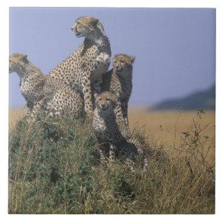 Africa, Kenya, Masai Mara Game Reserve, Adult 4 Tiles