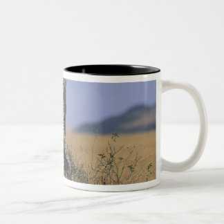 Africa, Kenya, Masai Mara Game Reserve, Adult 4 Two-Tone Coffee Mug