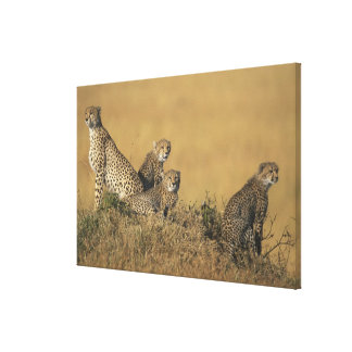 Africa, Kenya, Masai Mara Game Reserve, Adult 5 Gallery Wrapped Canvas