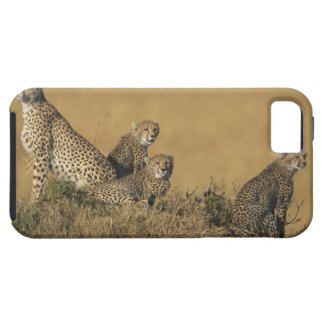 Africa, Kenya, Masai Mara Game Reserve, Adult 5 iPhone SE/5/5s Case