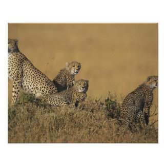 Africa, Kenya, Masai Mara Game Reserve, Adult 5 Poster