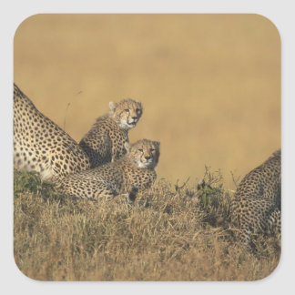 Africa, Kenya, Masai Mara Game Reserve, Adult 5 Stickers