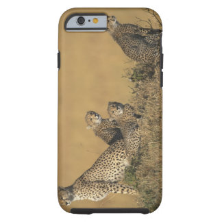 Africa, Kenya, Masai Mara Game Reserve, Adult 5 Tough iPhone 6 Case