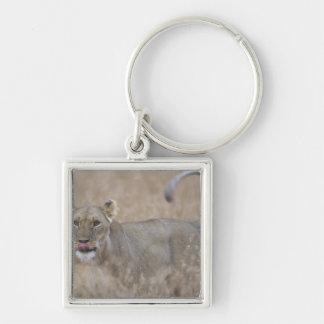 Africa, Kenya, Masai Mara Game Reserve, Adult 6 Keychain