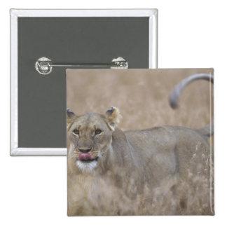 Africa, Kenya, Masai Mara Game Reserve, Adult 6 Pinback Button