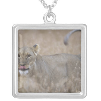 Africa, Kenya, Masai Mara Game Reserve, Adult 6 Silver Plated Necklace
