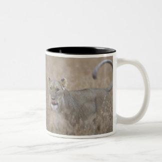 Africa, Kenya, Masai Mara Game Reserve, Adult 6 Two-Tone Coffee Mug