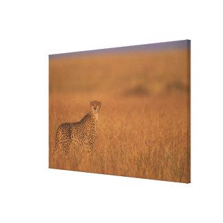 Africa, Kenya, Masai Mara Game Reserve, Adult Canvas Prints